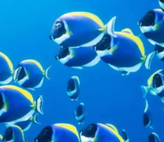 Bluebot: Scientists Create Underwater Robots That Swim Like Schools of Fish